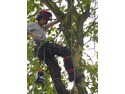 Tree Surgeon in Bristol