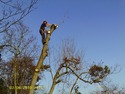 Tree Surgeon, Fencer in Erith