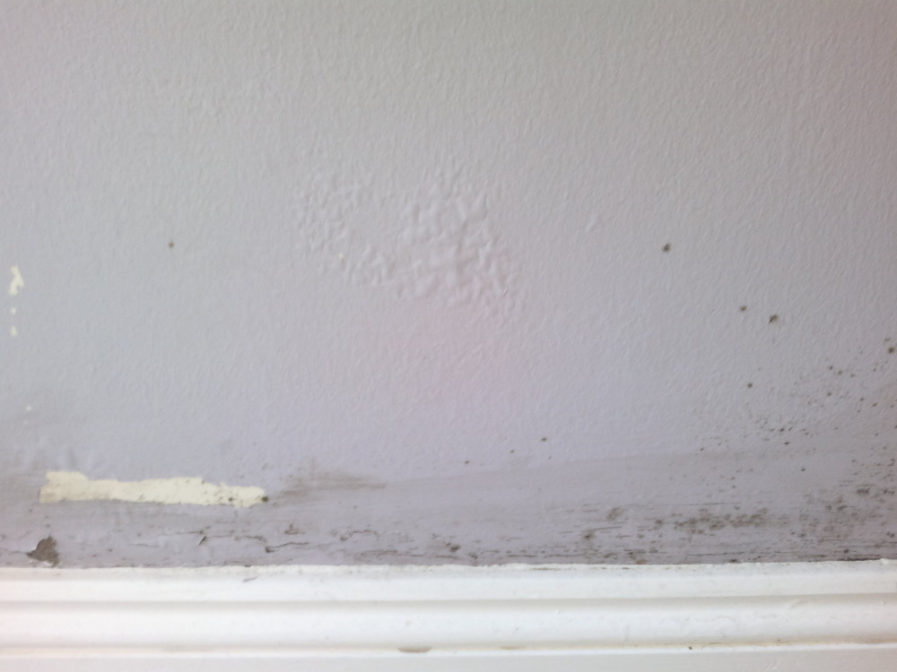 Damp on bottom of exterior wall damp proofing job in - Damp proofing paint for exterior walls ...