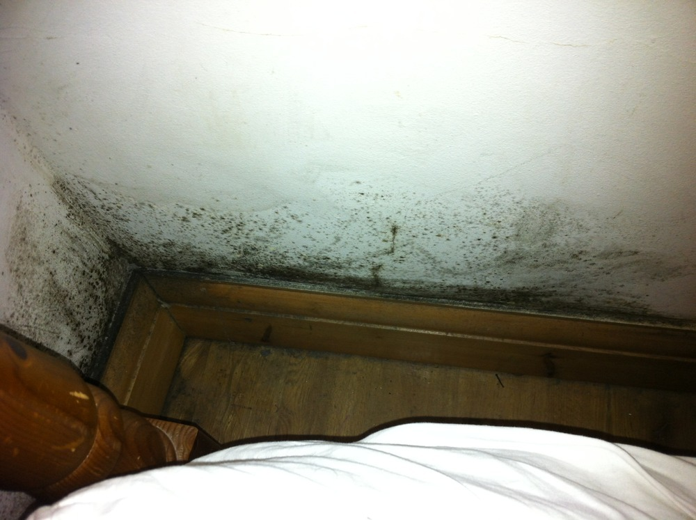how to detect mold in bedroom